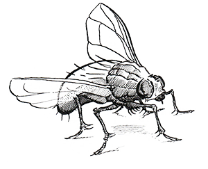 aeres hogeschool illustration insect